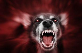 Dog Attack Claims Lawyer Stockbridge GA